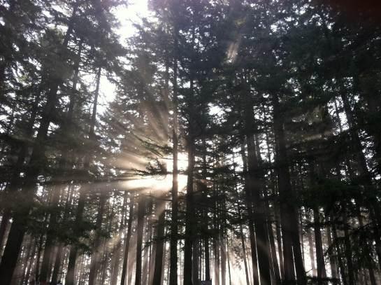 Glorious sun! A rare sight in the Oregon winter.